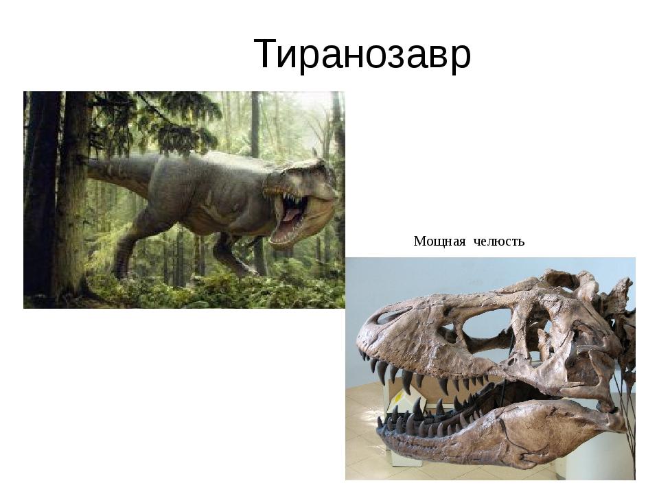 Тиранозавр Мощная челюсть