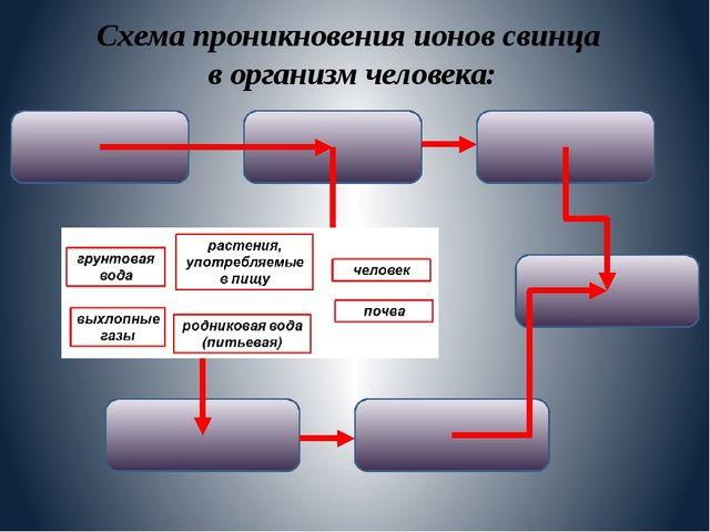 Схема проникновения ионов свинца в организм человека: