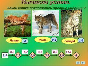 Какой кошке поклонялись древние индейцы? Гепард Ягуар Рысь 2,5 -0,3 -3,1 -0,9