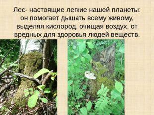 Лес- настоящие легкие нашей планеты: он помогает дышать всему живому, выделяя