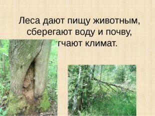 Леса дают пищу животным, сберегают воду и почву, смягчают климат.