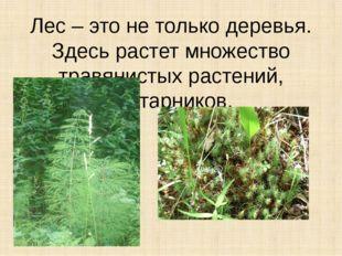 Лес – это не только деревья. Здесь растет множество травянистых растений, кус