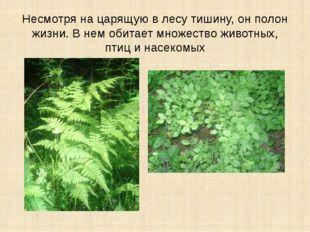 Несмотря на царящую в лесу тишину, он полон жизни. В нем обитает множество жи