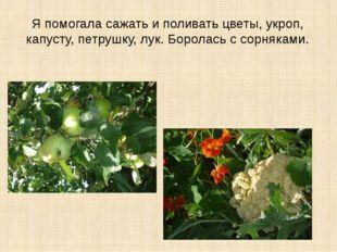Я помогала сажать и поливать цветы, укроп, капусту, петрушку, лук. Боролась с