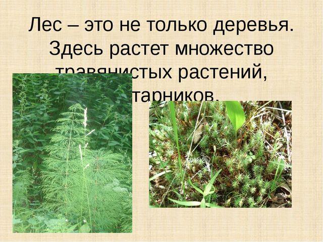 Лес – это не только деревья. Здесь растет множество травянистых растений, кус...