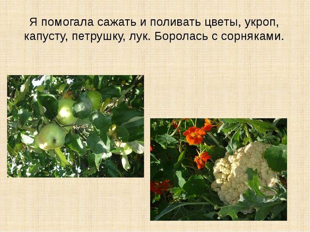 Я помогала сажать и поливать цветы, укроп, капусту, петрушку, лук. Боролась с...