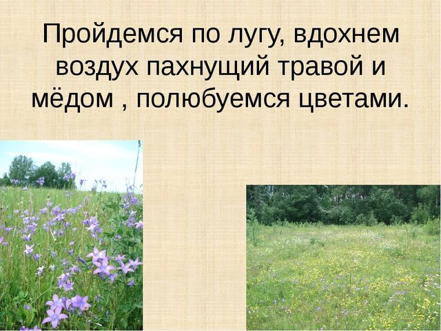 Пройдемся по лугу, вдохнем воздух пахнущий травой и мёдом , полюбуемся цветами.