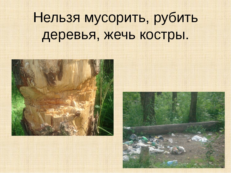 Нельзя мусорить, рубить деревья, жечь костры.