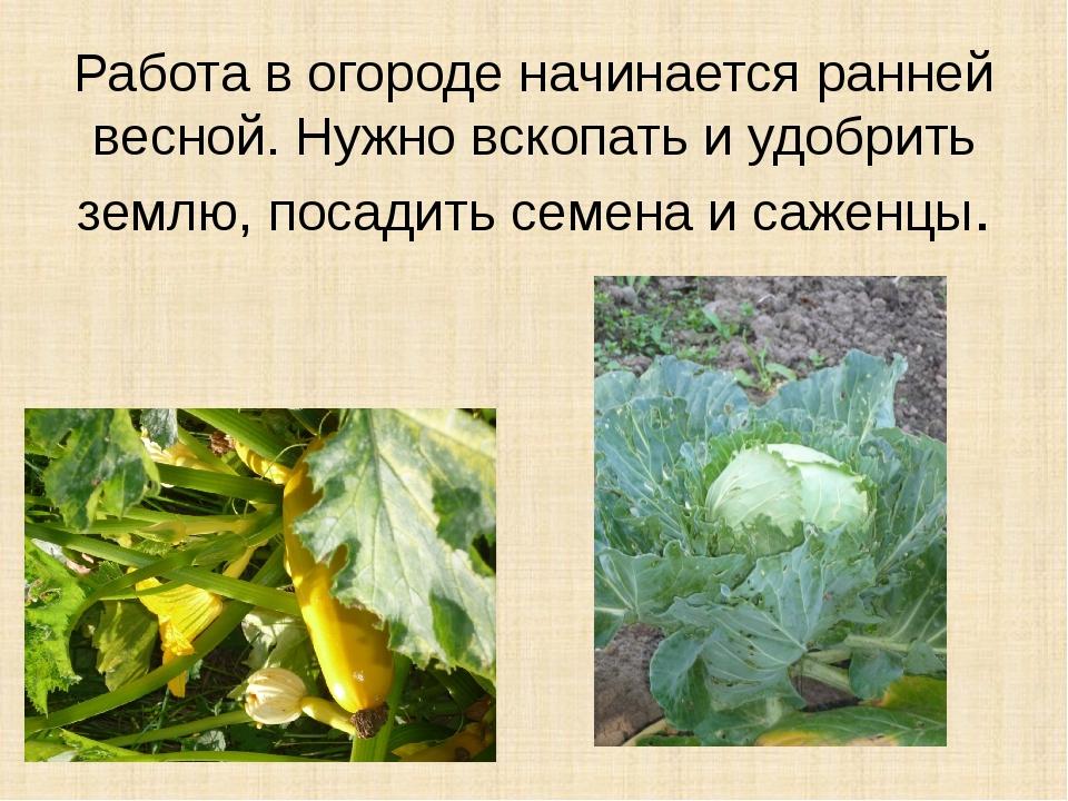Работа в огороде начинается ранней весной. Нужно вскопать и удобрить землю, п...