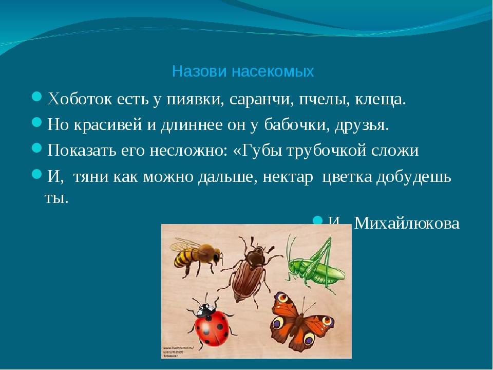 Назови насекомых Хоботок есть у пиявки, саранчи, пчелы, клеща. Но красивей и...