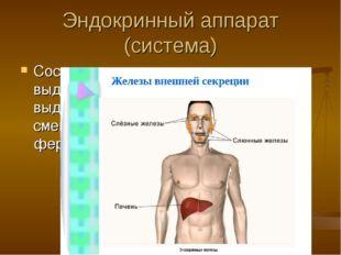 Эндокринный аппарат (система) Состоит из желез: эндокринных – выделяют гормон