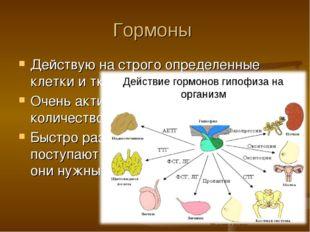 Гормоны Действую на строго определенные клетки и ткани (органы) Очень активны
