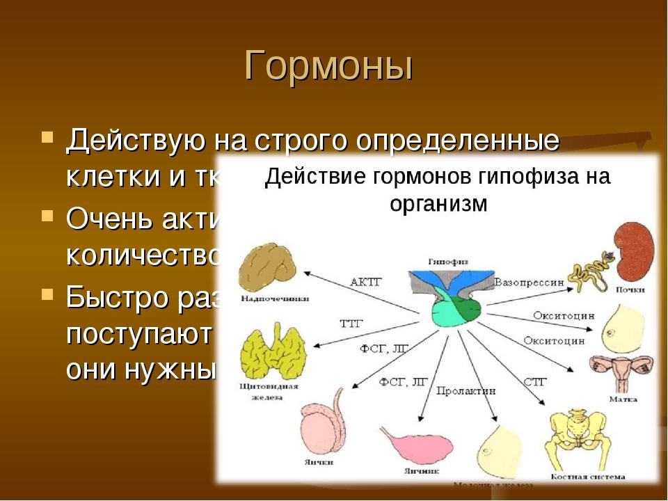 Гормоны Действую на строго определенные клетки и ткани (органы) Очень активны...