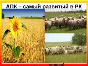 АПК – самый развитый в РК Земледелие Зерновые (87% РК): яровая пшеница (75%),