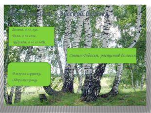 Много загадок о русской берёзке. Зелена, а не луг, Бела, а не снег, Кудрява,