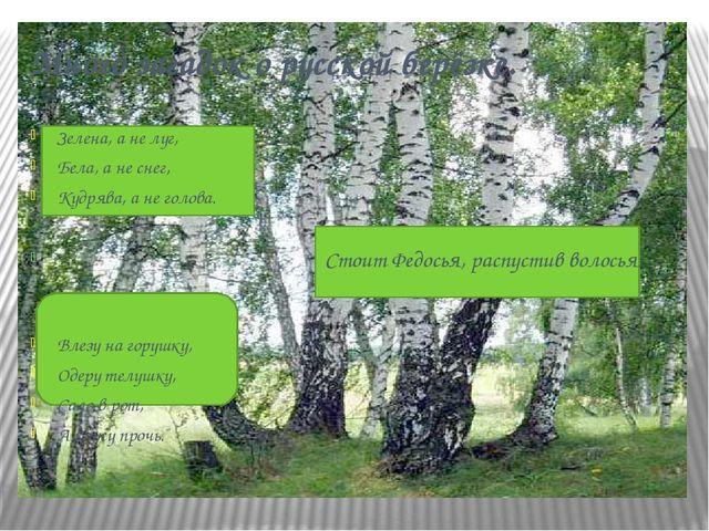 Много загадок о русской берёзке. Зелена, а не луг, Бела, а не снег, Кудрява,...