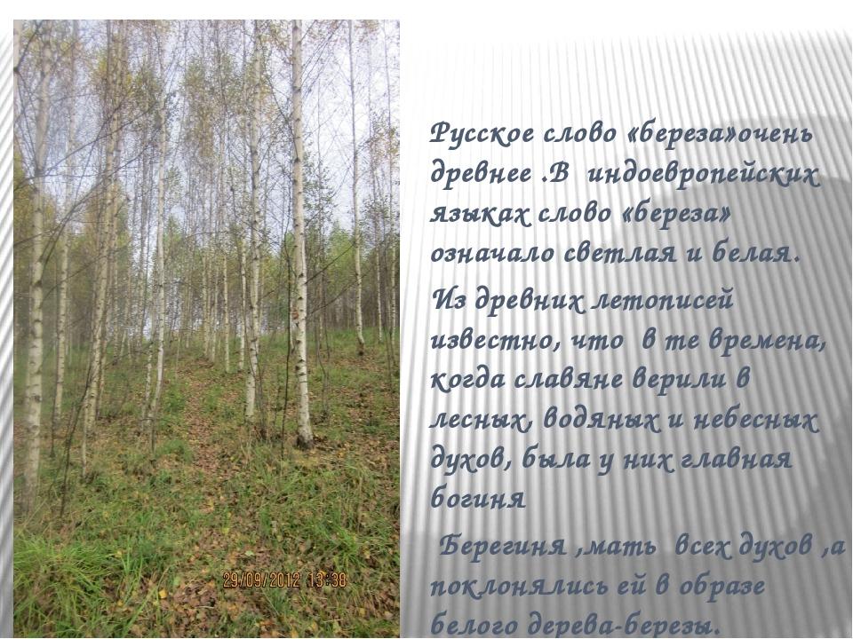 Русское слово «береза»очень древнее .В индоевропейских языках слово «береза»...
