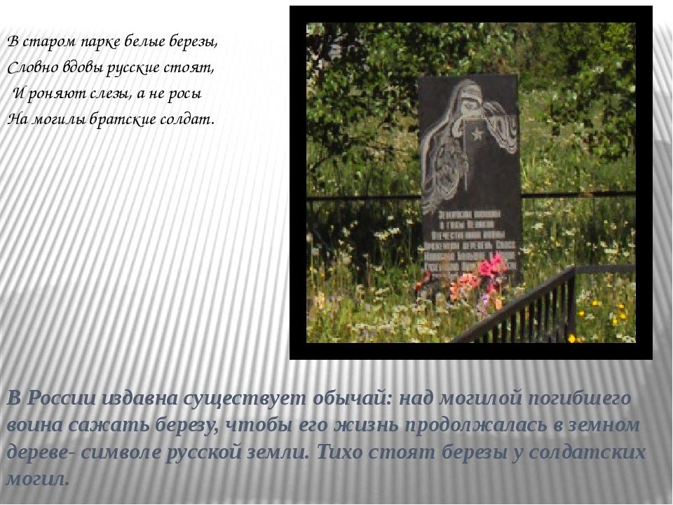 В России издавна существует обычай: над могилой погибшего воина сажать березу...