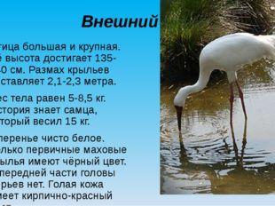 Внешний вид Птица большая и крупная. Её высота достигает 135-140 см. Размах к