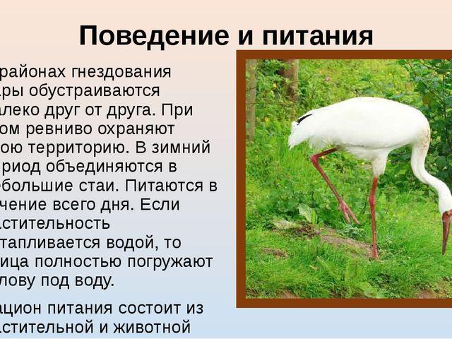 Поведение и питания В районах гнездования пары обустраиваются далеко друг от...