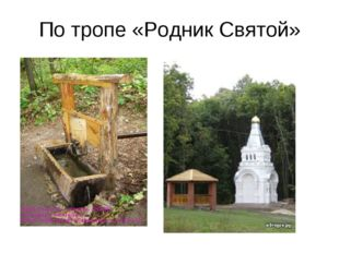 По тропе «Родник Святой»