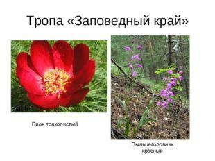 Тропа «Заповедный край» Пион тонколистый Пыльцеголовник красный