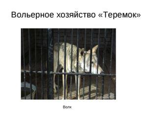 Вольерное хозяйство «Теремок» Волк