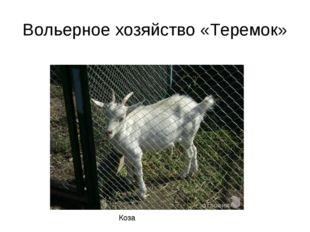 Вольерное хозяйство «Теремок» Коза