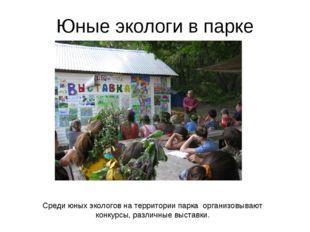 Юные экологи в парке Среди юных экологов на территории парка организовывают к