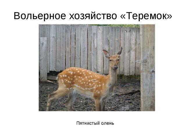 Вольерное хозяйство «Теремок» Пятнистый олень