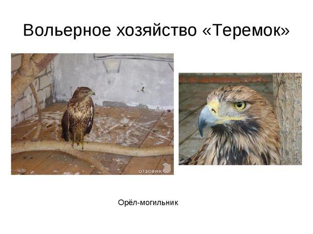 Вольерное хозяйство «Теремок» Орёл-могильник