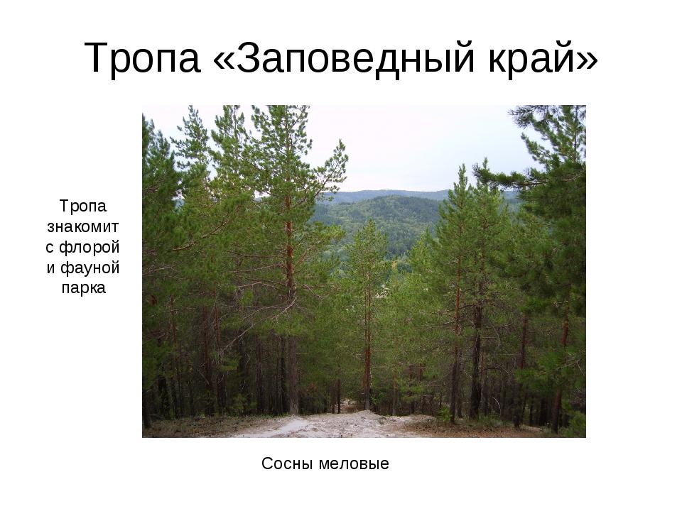 Тропа «Заповедный край» Сосны меловые Тропа знакомит с флорой и фауной парка