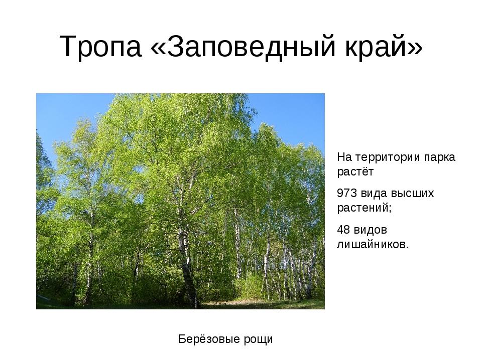 Тропа «Заповедный край» Берёзовые рощи На территории парка растёт 973 вида вы...