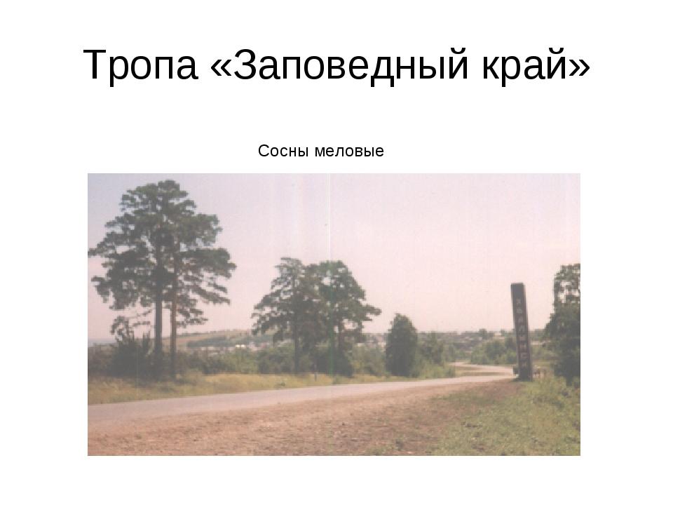 Тропа «Заповедный край» Сосны меловые