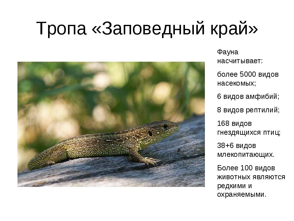Тропа «Заповедный край» Фауна насчитывает: более 5000 видов насекомых; 6 видо...