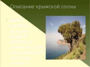 Описание крымской сосны Ареал растения включает Крым. В древности крымская со