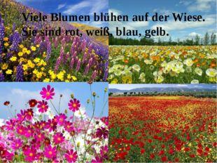 Viele Blumen blühen auf der Wiese. Sie sind rot, weiß, blau, gelb.