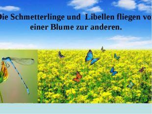 Die Schmetterlinge und Libellen fliegen von einer Blume zur anderen.