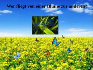 Wer fliegt von einer Blume zur anderen?