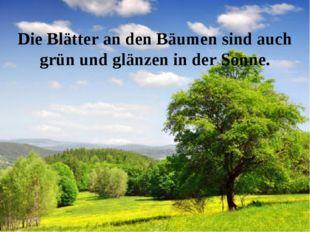 Die Blätter an den Bäumen sind auch grün und glänzen in der Sonne.