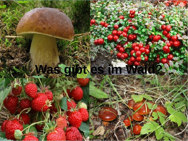 Was gibt es im Wald?