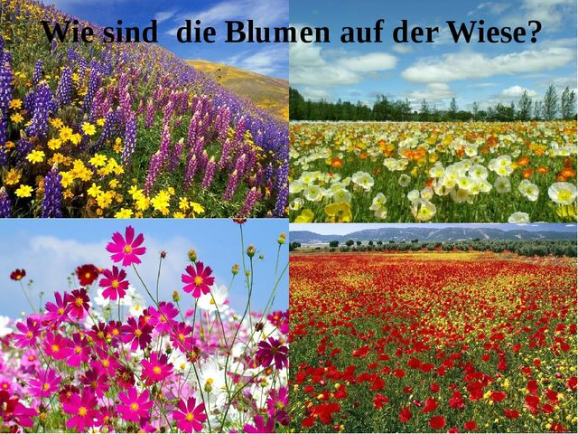 Wie sind die Blumen auf der Wiese? .