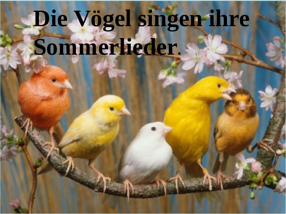 Die Vögel singen ihre Sommerlieder.