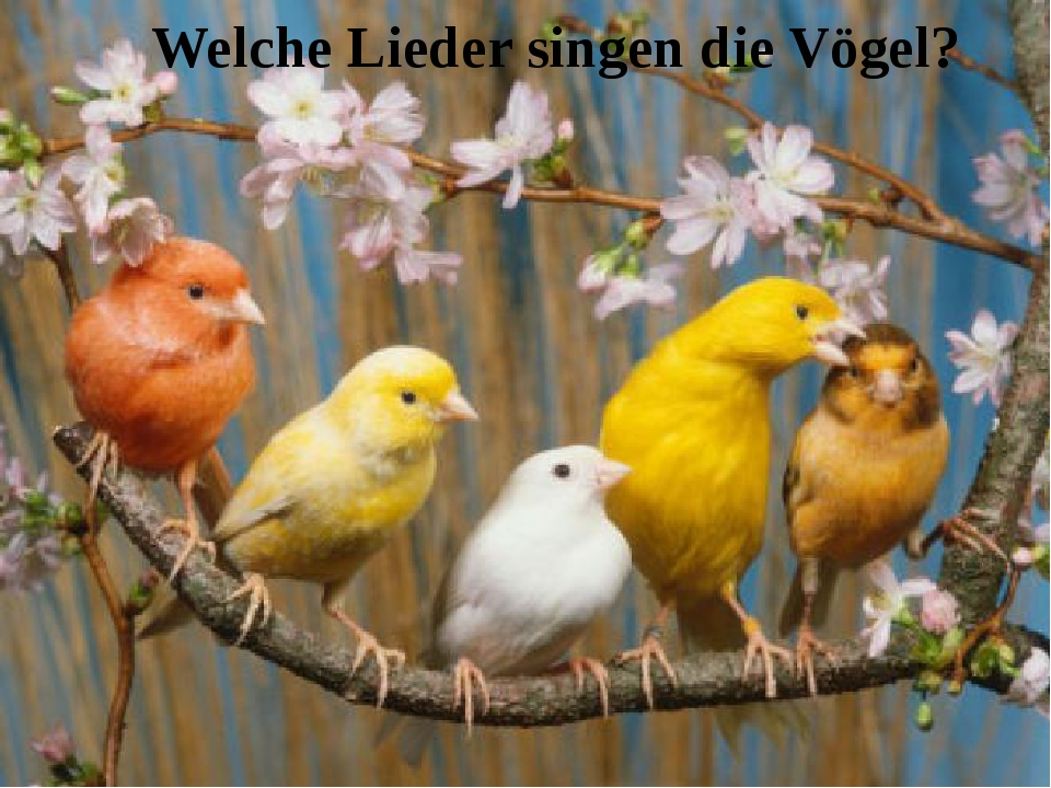 Welche Lieder singen die Vögel?