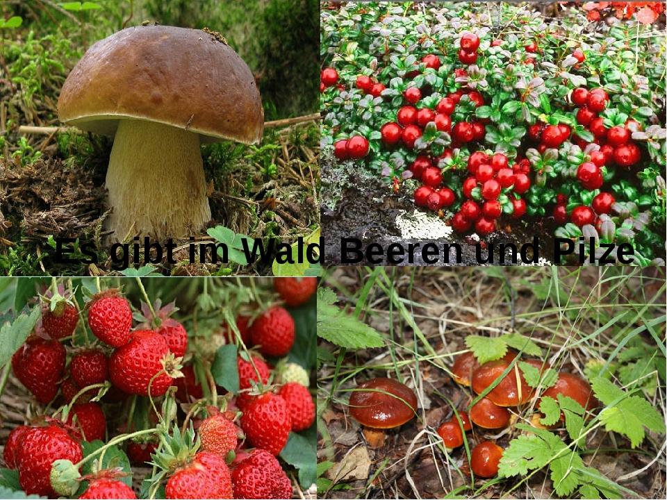 Es gibt im Wald Beeren und Pilze