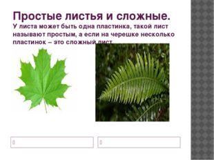 Простые листья и сложные. У листа может быть одна пластинка, такой лист назыв