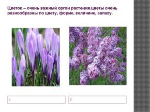 Цветок – очень важный орган растения.цветы очень разнообразны по цвету, форме
