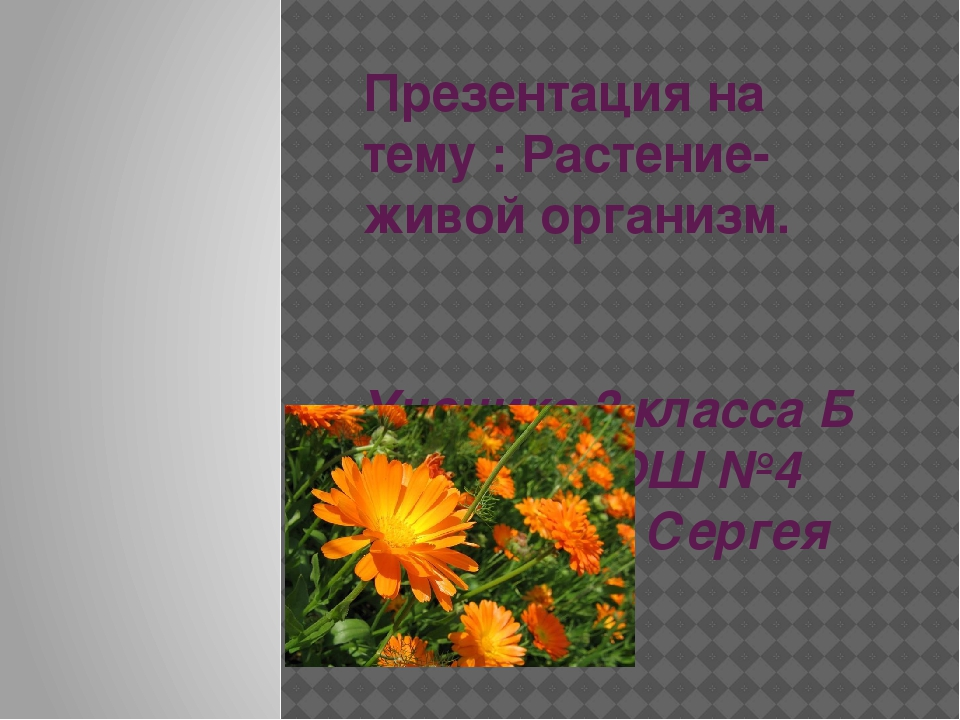 Презентация на тему : Растение- живой организм. Ученика 3 класса Б МБОУ РСОШ...
