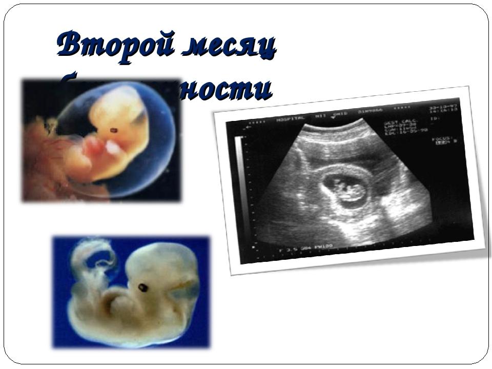 Второй месяц беременности