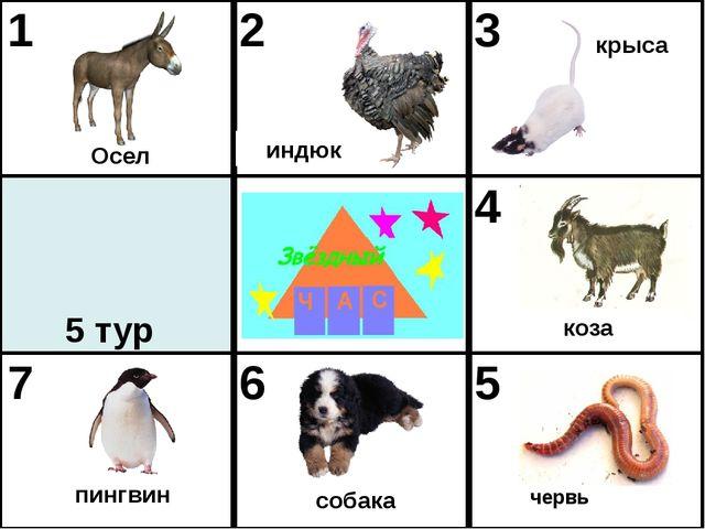 червь Осел индюк крыса пингвин собака коза 5 тур 1 2 3 4 7 6 5